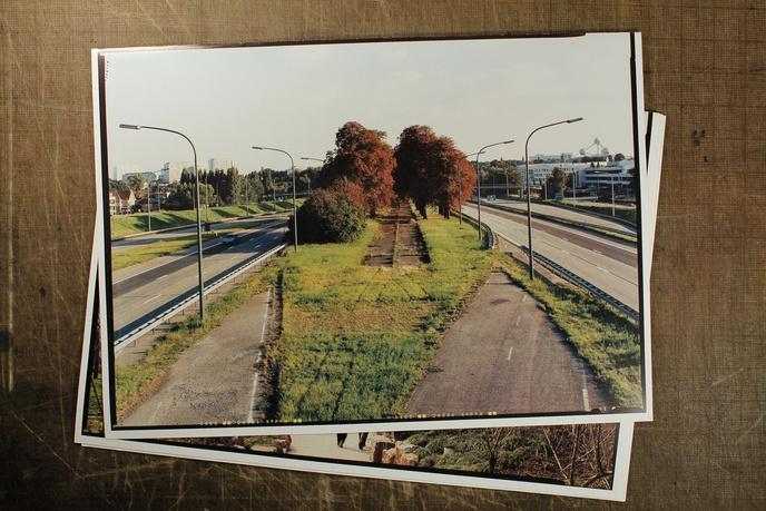 Urban Arboretum thumbnail 4