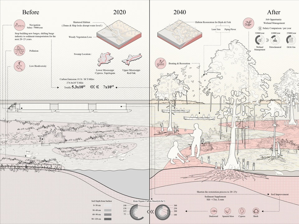 Rendering illustrating before and after effects of restoration of the swamp.