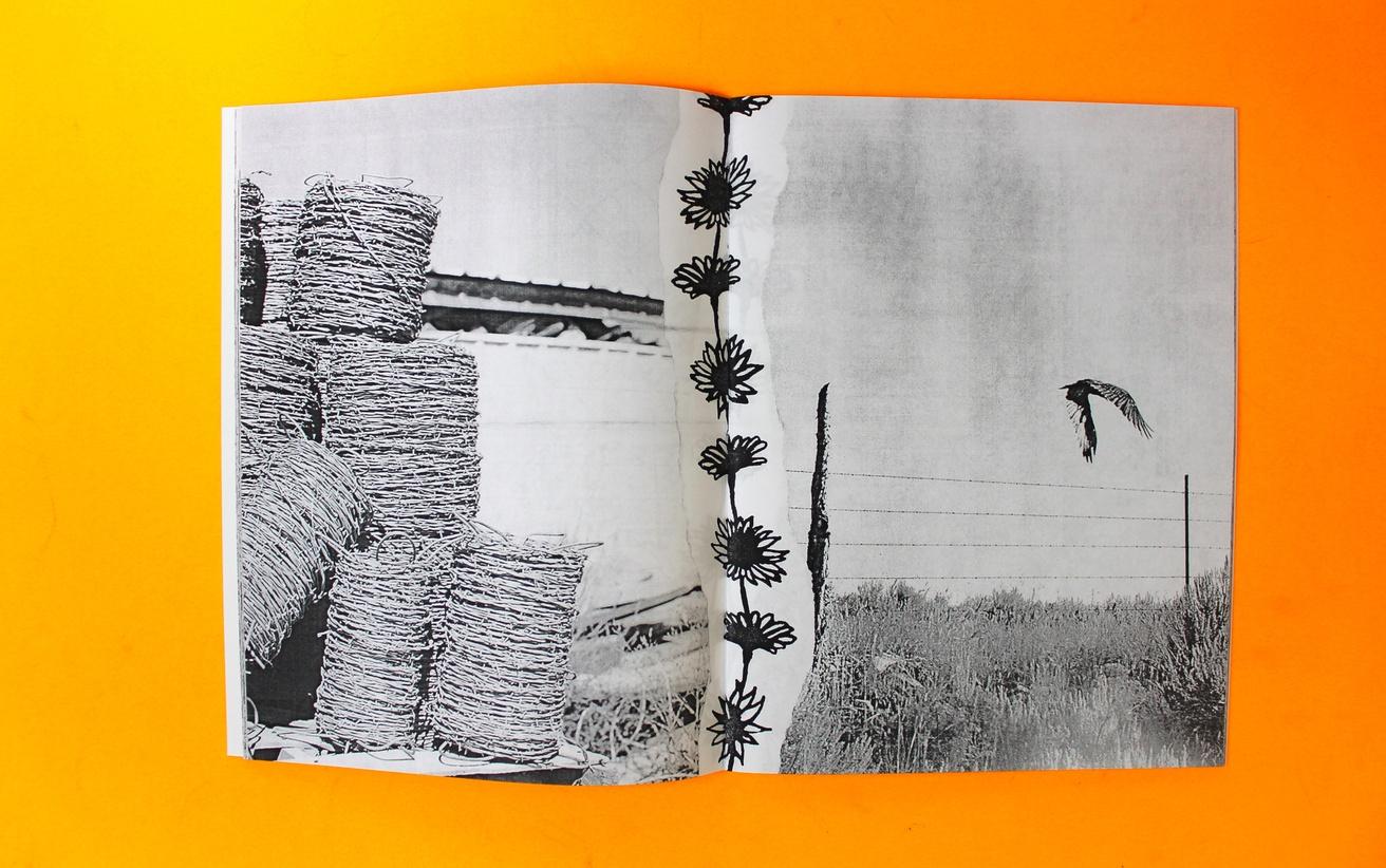 Ditch Daisies thumbnail 3