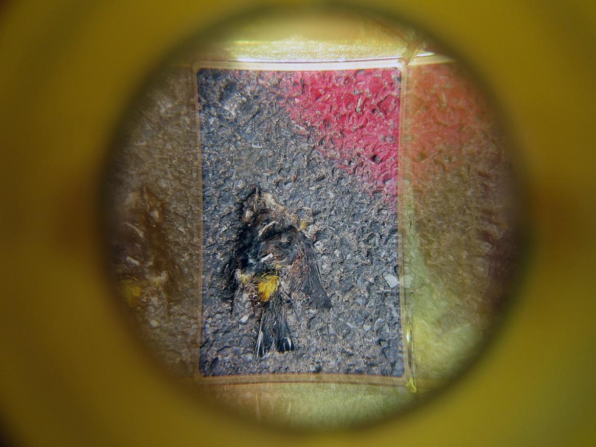 What in Me is Dark Illumine (Yellow Viewer) thumbnail 2