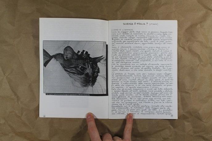 Animalia thumbnail 4