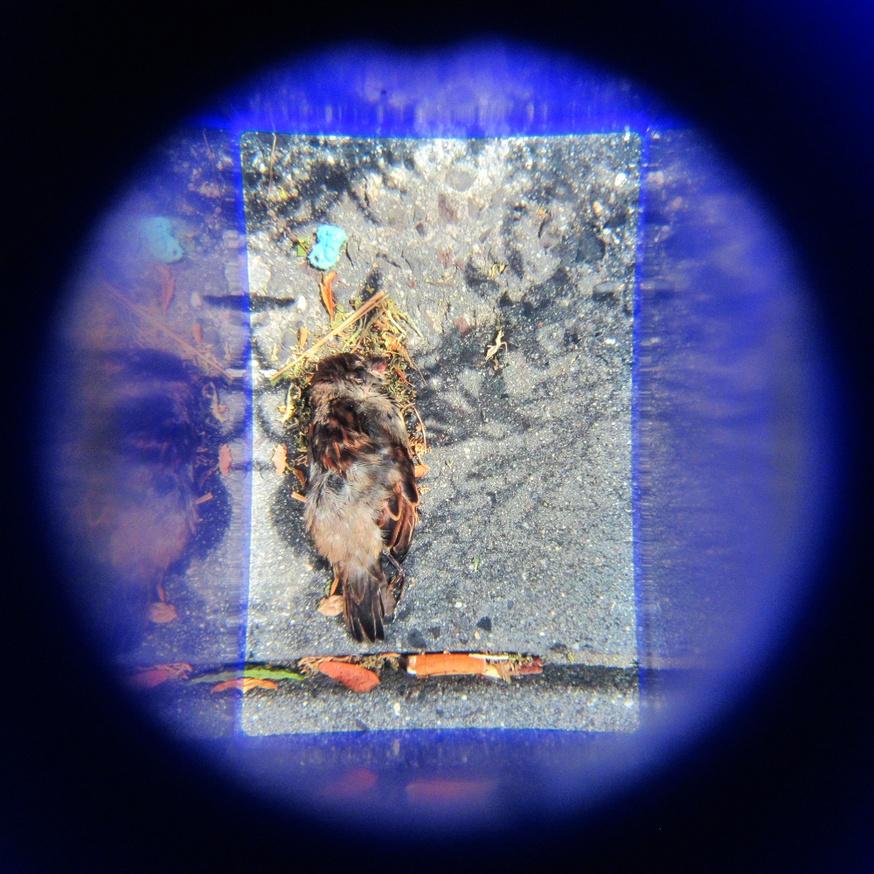 What in Me is Dark Illumine (Blue Bird Viewer) [fourth edition] thumbnail 2