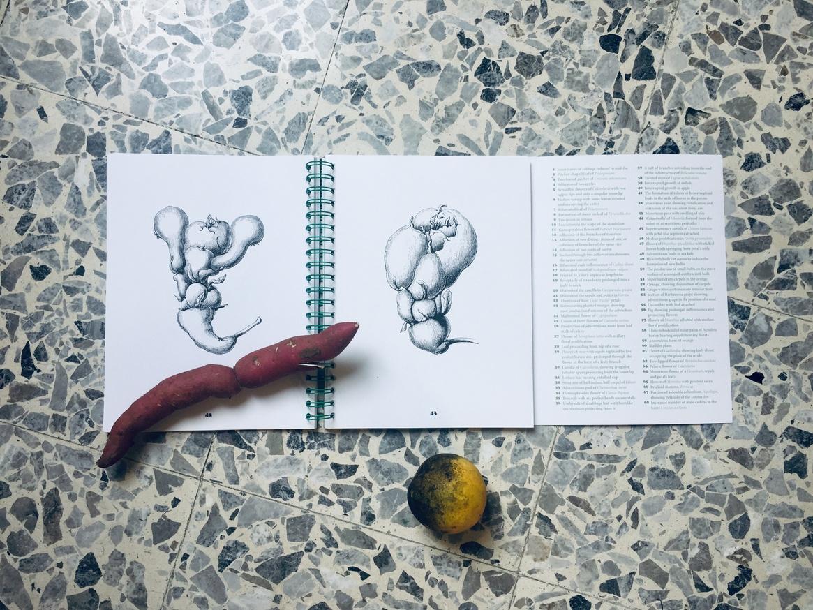 Vegetable Teratology Colouring Book thumbnail 5