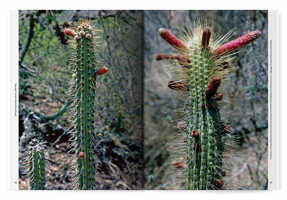 Xerophile: Cactus Photographs from Expeditions of the Obsessed thumbnail 2