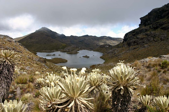 Photo of a páramo—a high-elevation ecosystem featuring succulent-like plant life in the foreground, with a water feature in the middle and mountains in the distance.